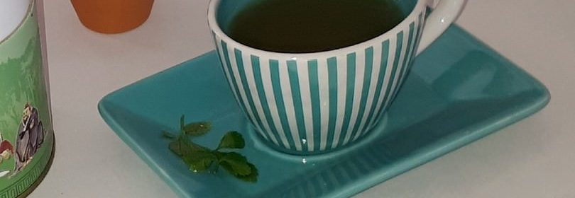 Matcha Tee Trend