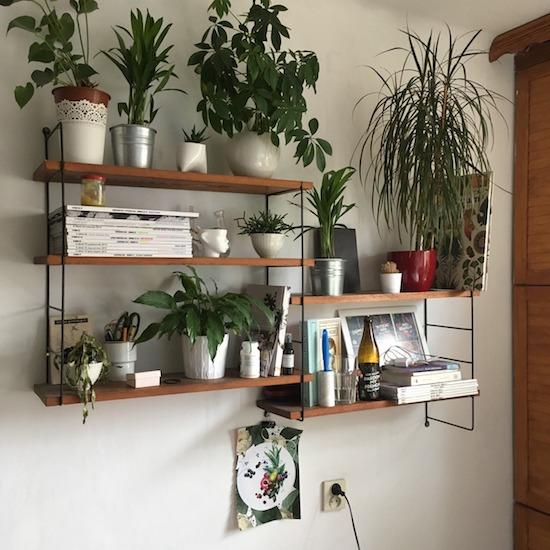 Zimmerpflanzen in Wohnzimmer gestalten: 9 Trend-Tipps für mehr Individualität