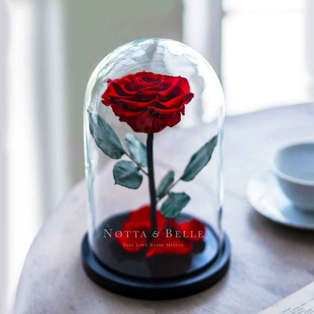 Rose im Glas
