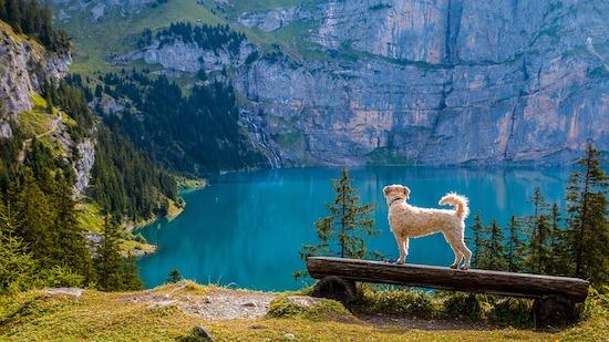 Schweizer-alpen in Die Schweiz erleben - Urlaub auf höchstem Niveau