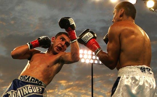Die besten Boxer der Welt