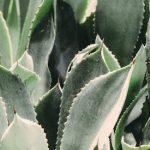 Aloe Vera Saft für bessere Gesundheit